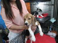 タイの犬1.JPG