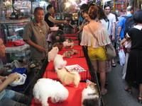 タイの犬2.JPG